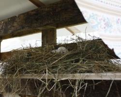 Witte-Tent-Moordrecht-2011255